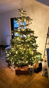 Click image for larger version  Name:Christmas tree.jpg Views:12 Size:100.1 KB ID:12587